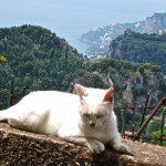 amalfi-kitty