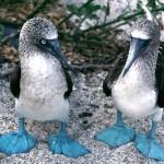 birds-galapagos