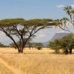 croppedimage450300-Landscape-Shaba-Natioanal-Park-2-Kenya-safari