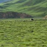 Tibet_01-1