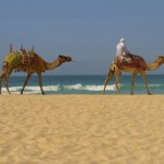 Camels-desert-and-ocean-in