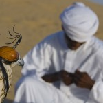 Falconry-in-Desert