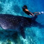 lo-scuba-diving-alle-maldive_b